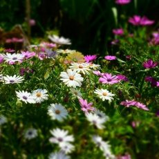 flores parque denia